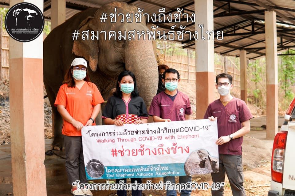 โครงการร่วมด้วยช่วยช้างฝ่า วิกฤติ Covid 19 ช่วยช้างถึงช้าง